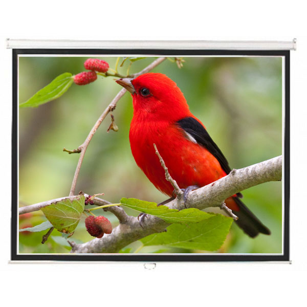 "Liberty  Lite (5'x7') 100"" (4:3) Instalock Screen with SRS"